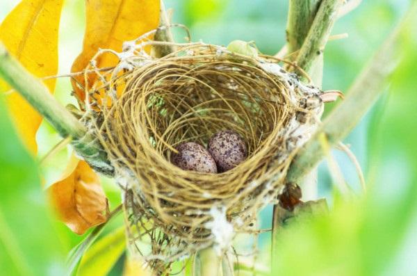 Гнездо на дереве - красивые рисунки для детей (23)