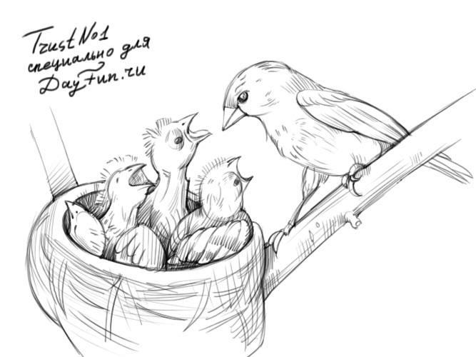 Гнездо на дереве - красивые рисунки для детей (25)