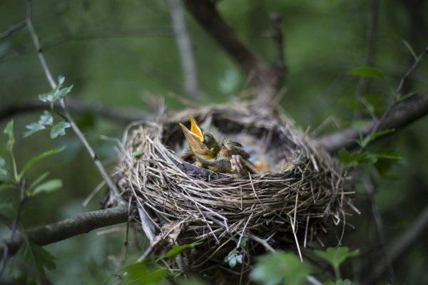 Гнездо на дереве - красивые рисунки для детей (3)