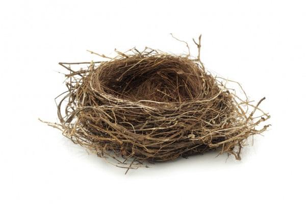 Гнездо на дереве - красивые рисунки для детей (5)