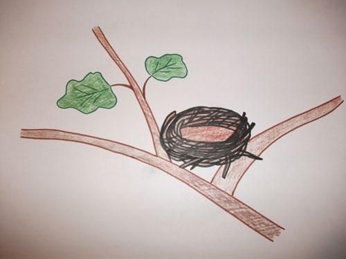 Гнездо на дереве - красивые рисунки для детей (8)