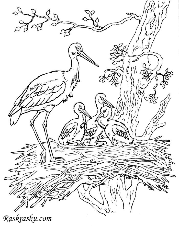 Гнездо на дереве - красивые рисунки для детей (9)