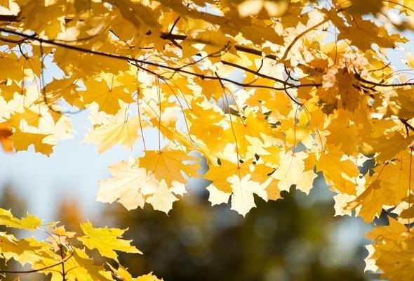 Лучшие фото осень золотая (11)
