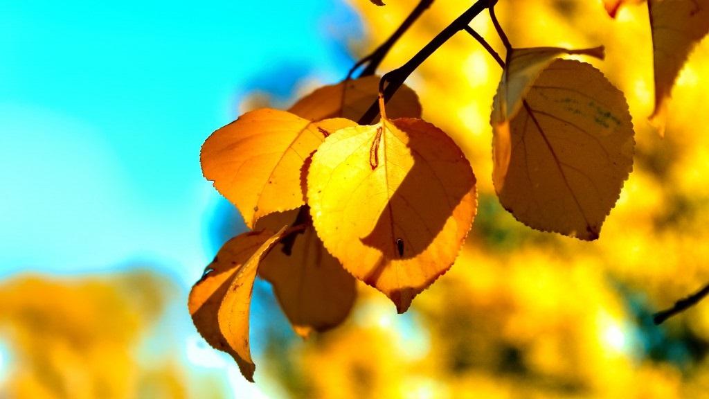 Лучшие фото осень золотая (12)