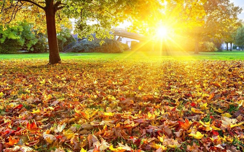 Лучшие фото осень золотая (15)