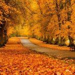 Лучшие фото осень золотая — подборка обоев за 2021 год