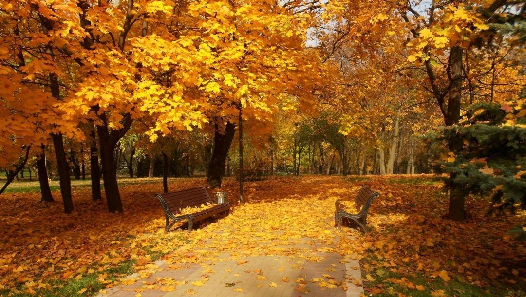 Лучшие фото осень золотая (17)