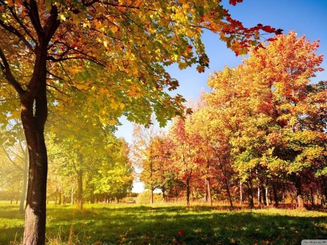 Лучшие фото осень золотая (19)