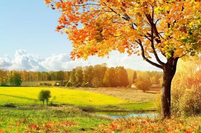Лучшие фото осень золотая (2)