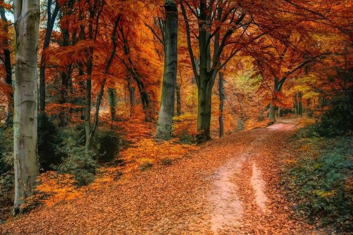 Лучшие фото осень золотая (20)