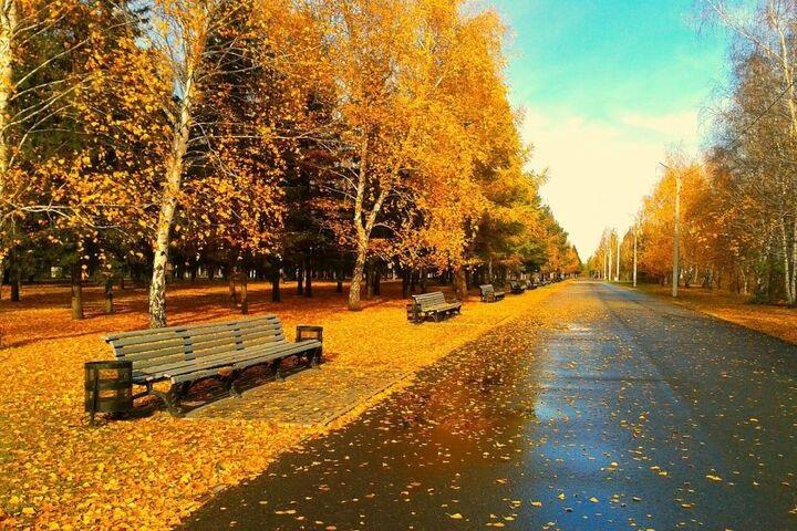 Лучшие фото осень золотая (21)