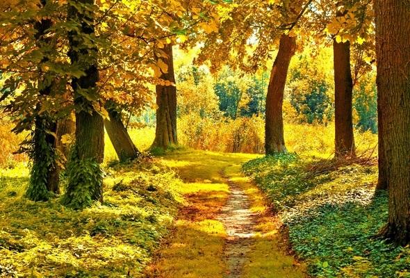 Лучшие фото осень золотая (22)