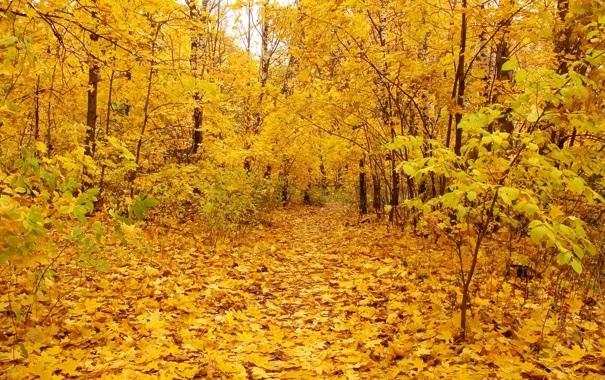Лучшие фото осень золотая (23)