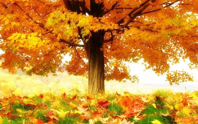 Лучшие фото осень золотая (4)