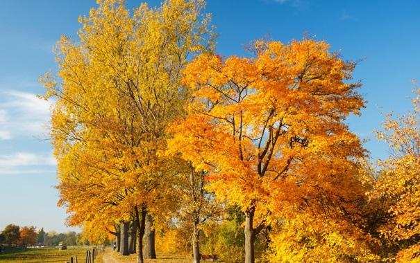 Лучшие фото осень золотая (6)