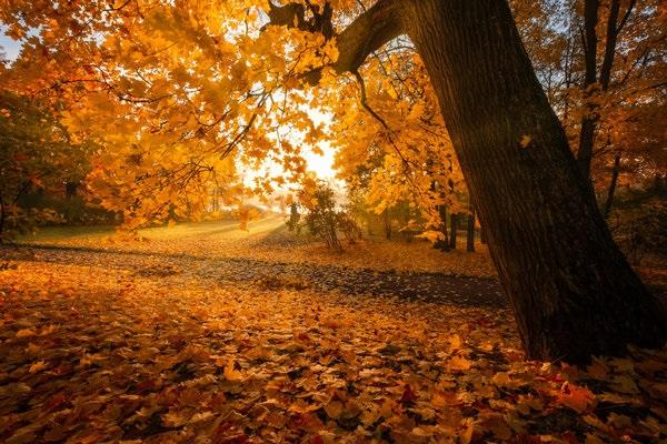 Лучшие фото осень золотая (7)