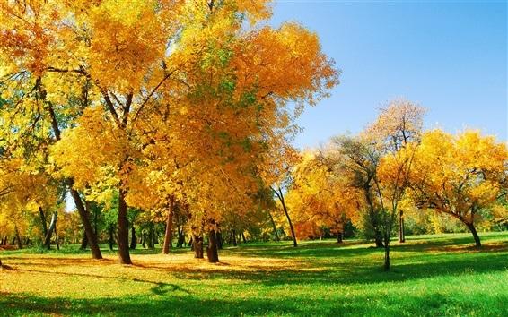 Лучшие фото осень золотая (8)