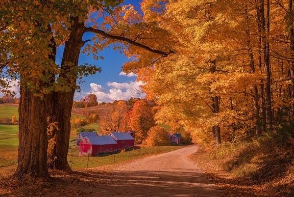 Лучшие фото осень золотая (9)