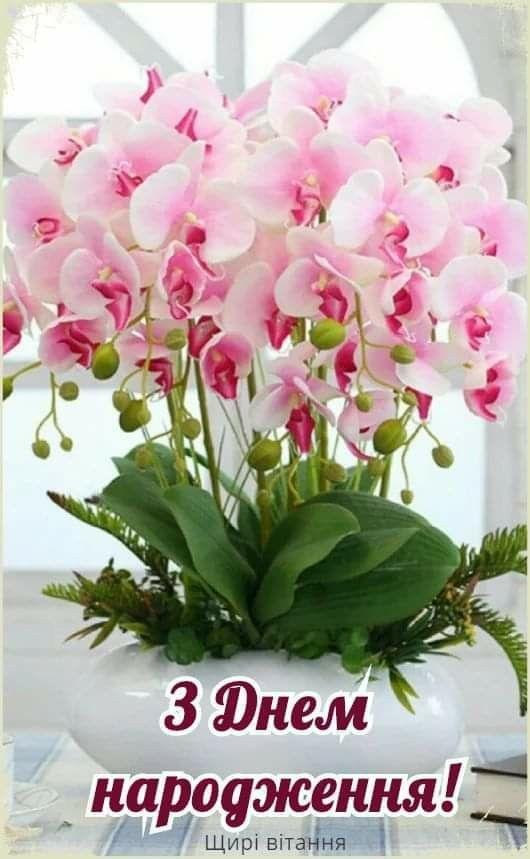 Орхидеи с днем рождения фото и открытки (11)