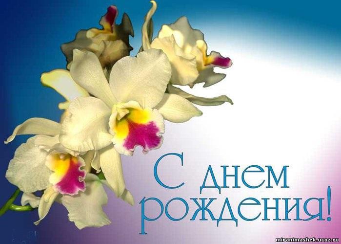 Орхидеи с днем рождения фото и открытки (13)