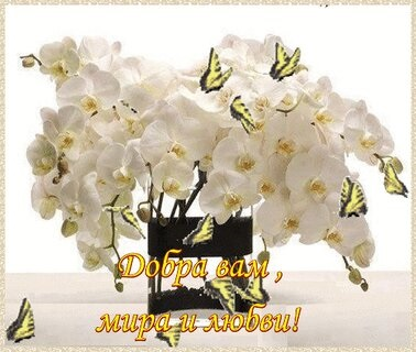 Орхидеи с днем рождения фото и открытки (22)