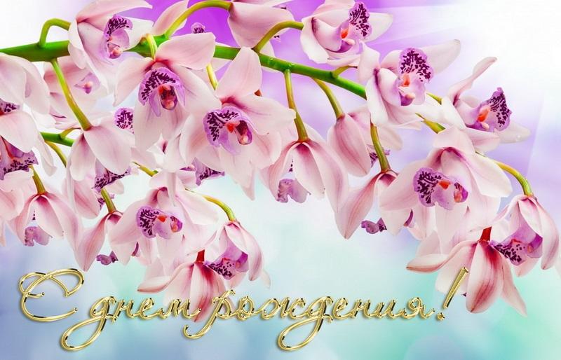 Орхидеи с днем рождения фото и открытки (3)