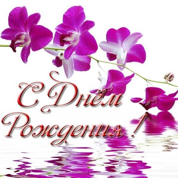 Орхидеи с днем рождения фото и открытки (8)