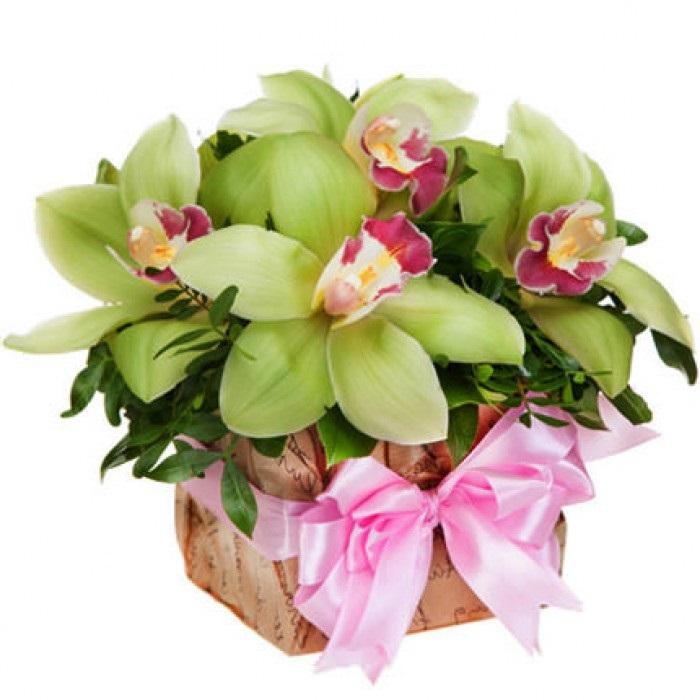 Орхидеи с днем рождения фото и открытки (9)