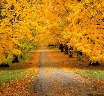 Осенние пейзажи 2021 года - большая фото подборка (12)