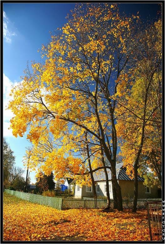 Осенние пейзажи 2021 года - большая фото подборка (20)