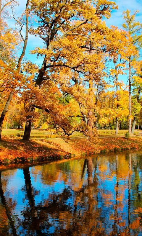 Осенние пейзажи 2021 года - большая фото подборка (27)