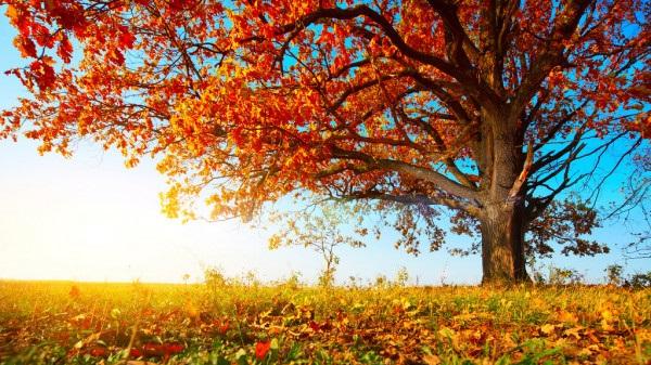 Осенние пейзажи 2021 года - большая фото подборка (3)