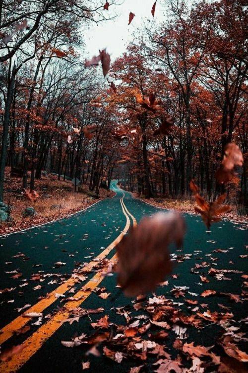 Осенние пейзажи 2021 года - большая фото подборка (30)
