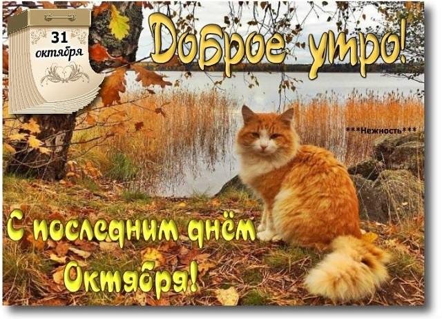 Доброе утро октября осенью - самые милые открытки (19)