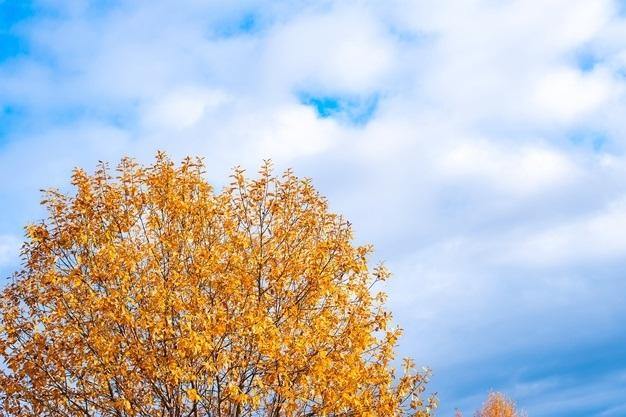 Картинки осеннего неба с облаками для детей (10)