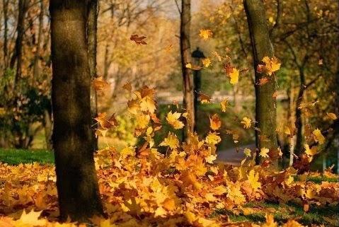 Красивые картинки осенний листопад для детей (13)