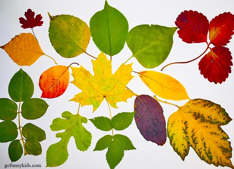 Красивые картинки осенний листопад для детей (19)