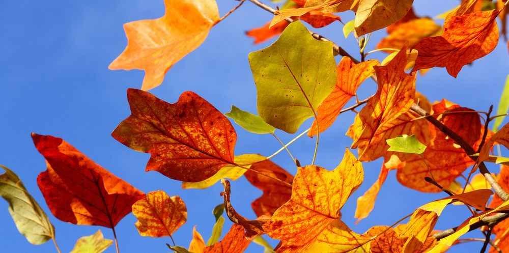 Красивые картинки осенний листопад для детей (24)