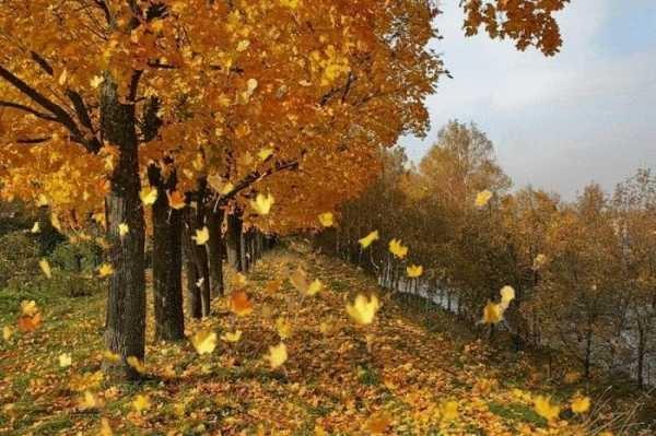 Красивые картинки осенний листопад для детей (6)
