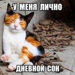 Фото котята милые с надписями — подборка новая за 2021 год