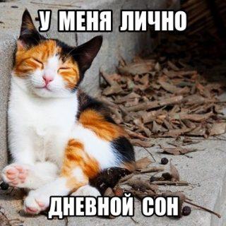 Фото котята милые с надписями   подборка новая за 2021 год (21)